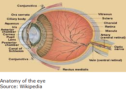 Picture of Anatomy of the Eye