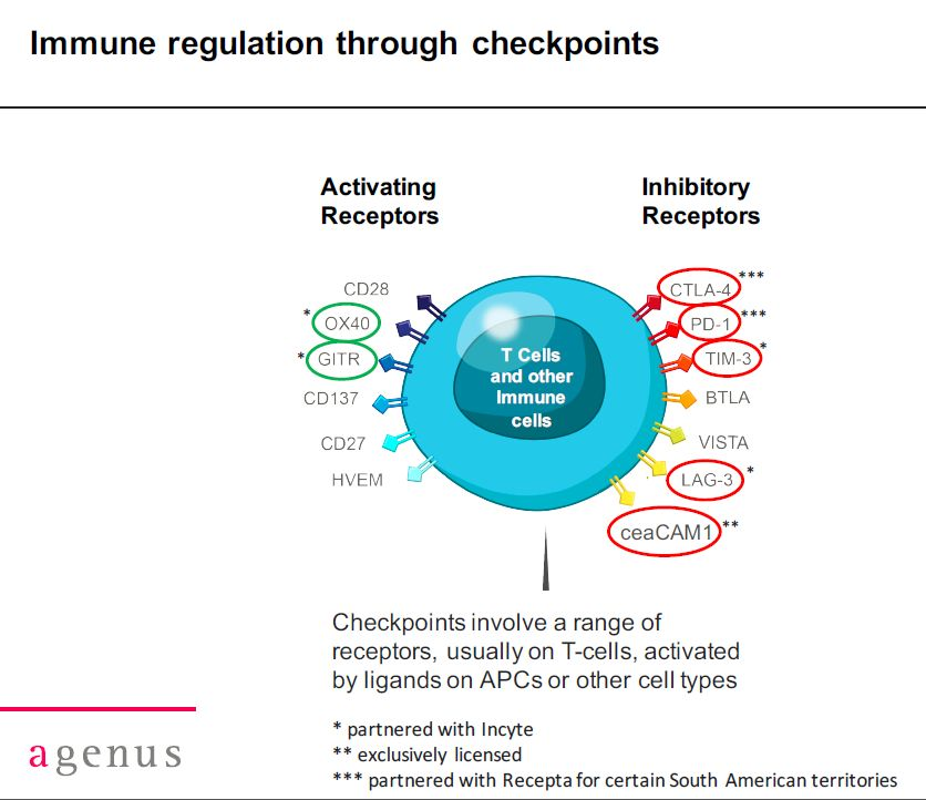 Image 2 Immun regulation throiugh checkpint modulation